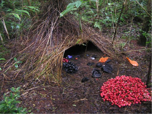 Bower bird nests demonstrate variability in nonhuman works which clearly are not dictated by instinct. http://www.viralforest.com/bower-bird/
