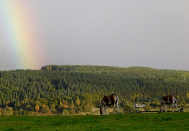 Kiang (wild_asses) & rainbow, Highland Wildlife Park. By sylvia duckworth [CC BY-SA 2.0 (http://creativecommons.org/licenses/by-sa/2.0)], via Wikimedia Commons