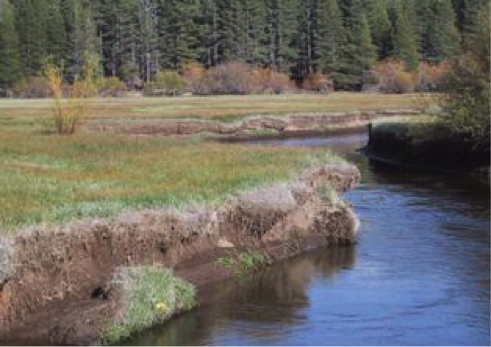 Stream incision near Lake Tahoe. Here the stream has eroded its bed resulting in lowered water tables and creating a dry grassland in place of a formerly moist, sub-irrigated meadow (US Forest Service Pacific Southwest Research Station).