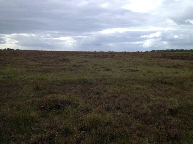 Cutaway Bog Monettia Bog, Ballinvalley, Killeigh, Co Offaly, Ann Lawlor